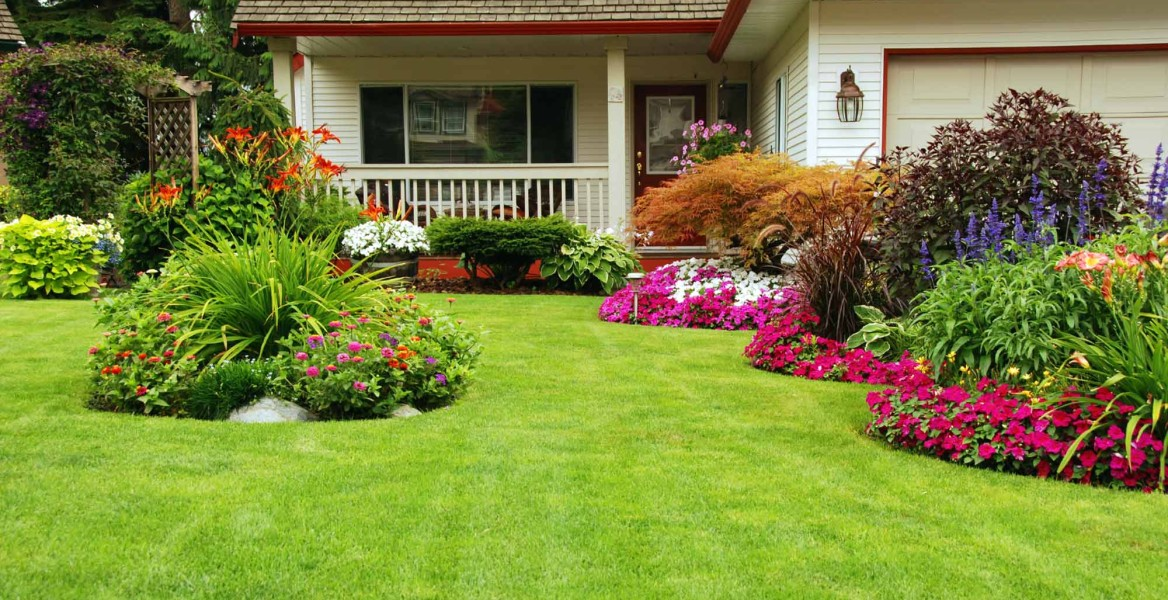 Nice lawn and landscaping in front of house